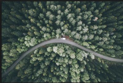tree-road-sample.PNG